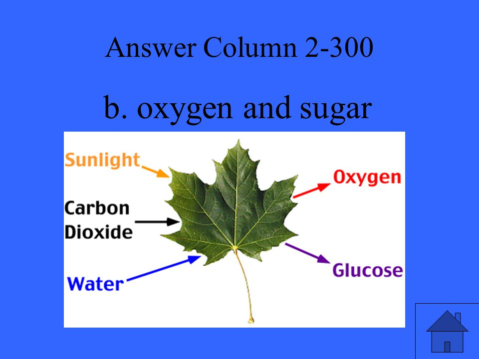 Answer Column 2-300 b. oxygen and sugar