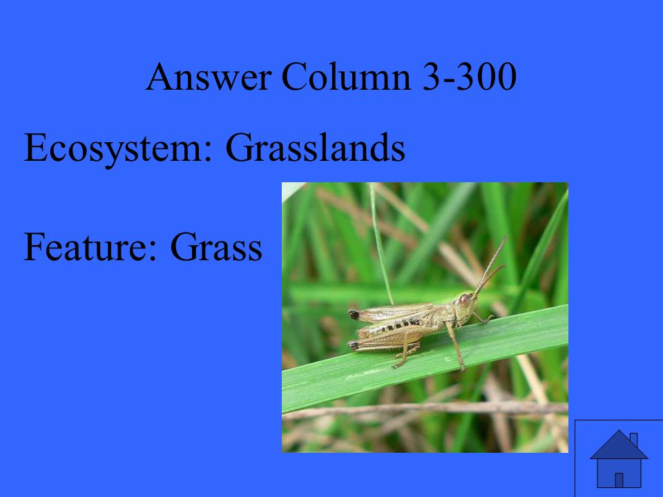 Answer Column 3-300 Ecosystem: Grasslands Feature: Grass