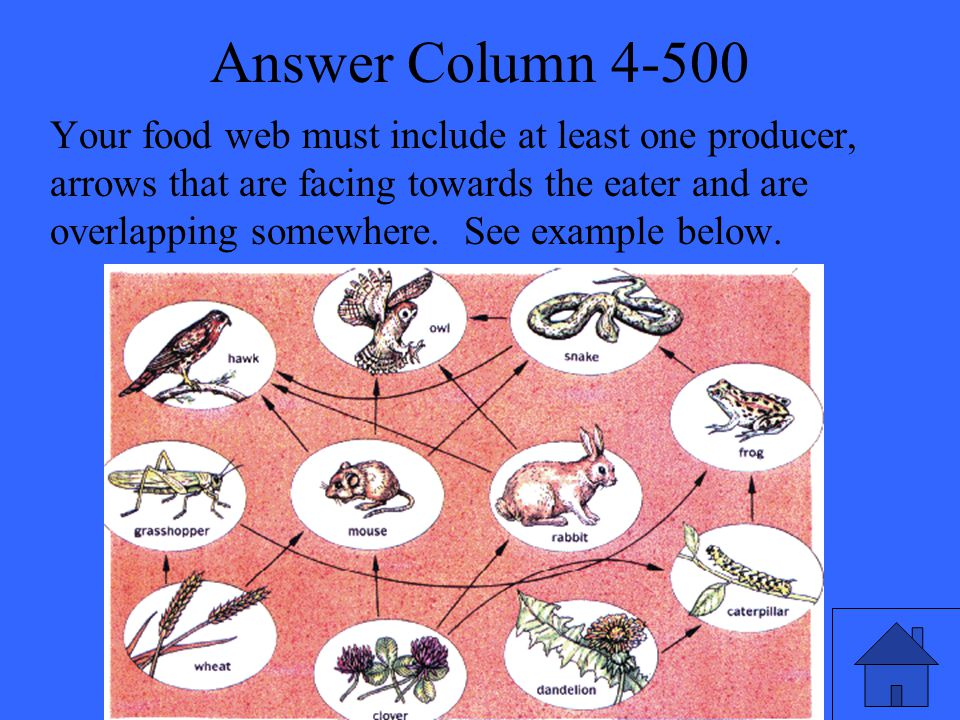 Answer Column 4-500 Your food web must include at least one producer, arrows that are facing towards the eater and are overlapping somewhere.