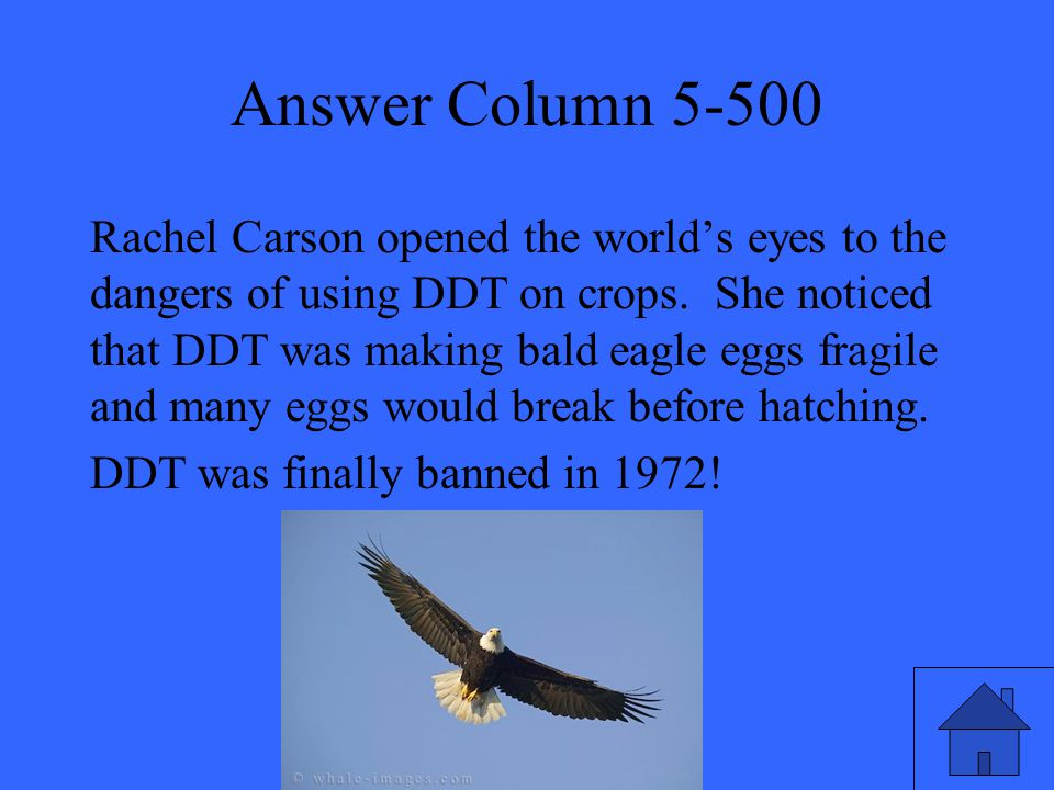 Answer Column 5-500 Rachel Carson opened the world's eyes to the dangers of using DDT on crops. She noticed that DDT was making bald eagle eggs fragil