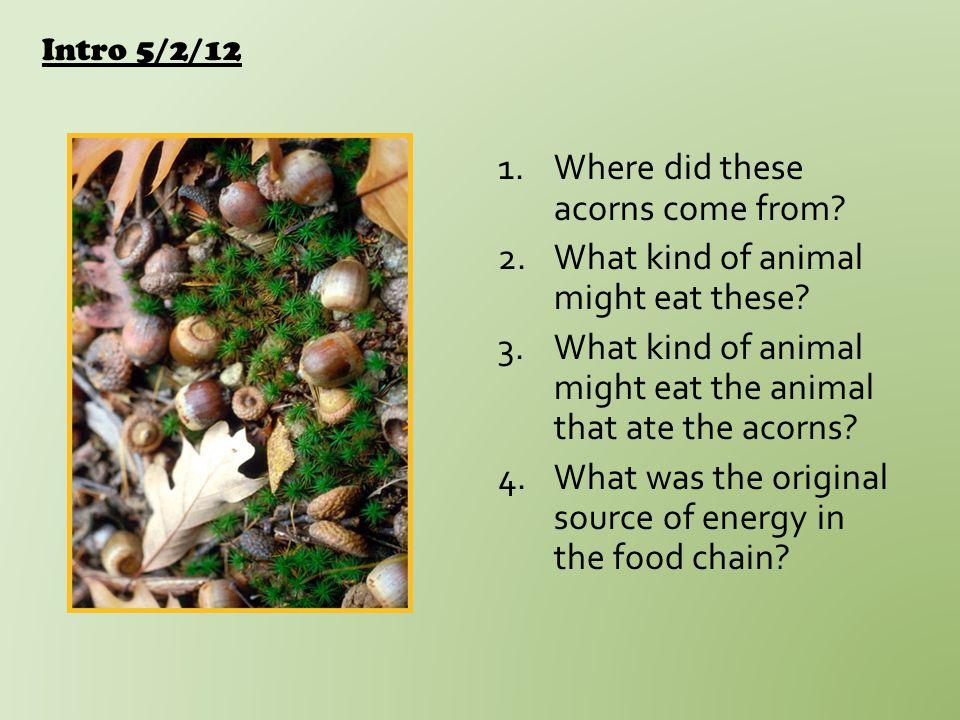 5/3/12 Food Webs Game