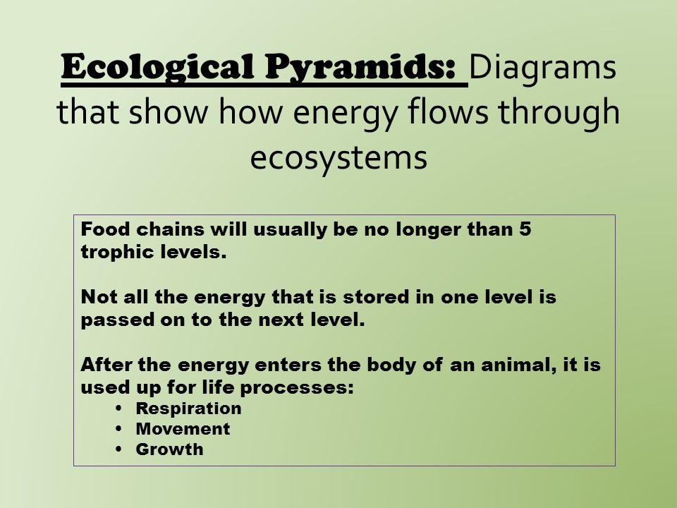 Ecological Pyramids: Diagrams that show how energy flows through ecosystems Food chains will usually be no longer than 5 trophic levels.