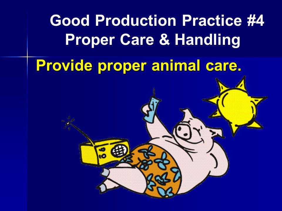 Provide proper animal care. Good Production Practice #4 Proper Care & Handling