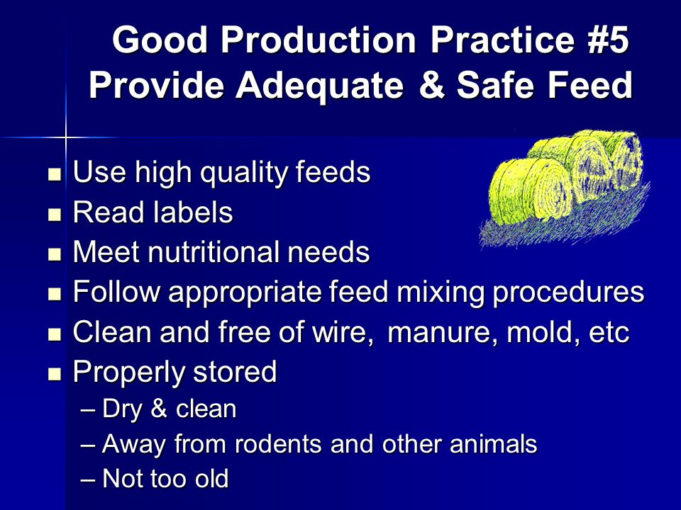 Use high quality feeds Use high quality feeds Read labels Read labels Meet nutritional needs Meet nutritional needs Follow appropriate feed mixing procedures Follow appropriate feed mixing procedures Clean and free of wire, manure, mold, etc Clean and free of wire, manure, mold, etc Properly stored Properly stored –Dry & clean –Away from rodents and other animals –Not too old Good Production Practice #5 Provide Adequate & Safe Feed Good Production Practice #5 Provide Adequate & Safe Feed