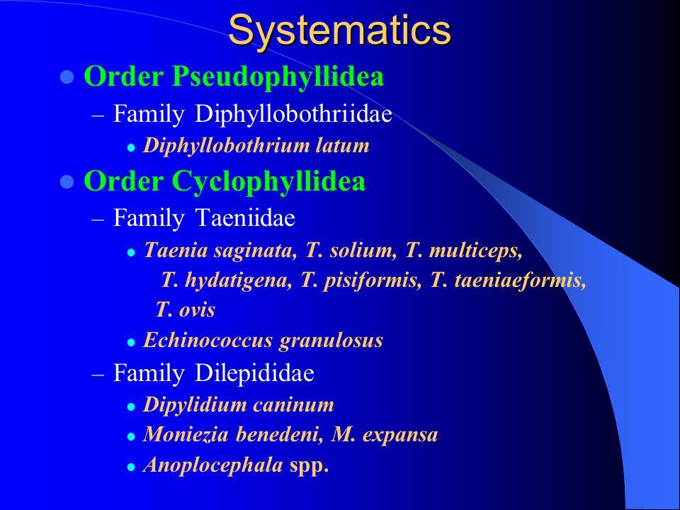 Systematics Order Pseudophyllidea – Family Diphyllobothriidae Diphyllobothrium latum Order Cyclophyllidea – Family Taeniidae Taenia saginata, T. soliu