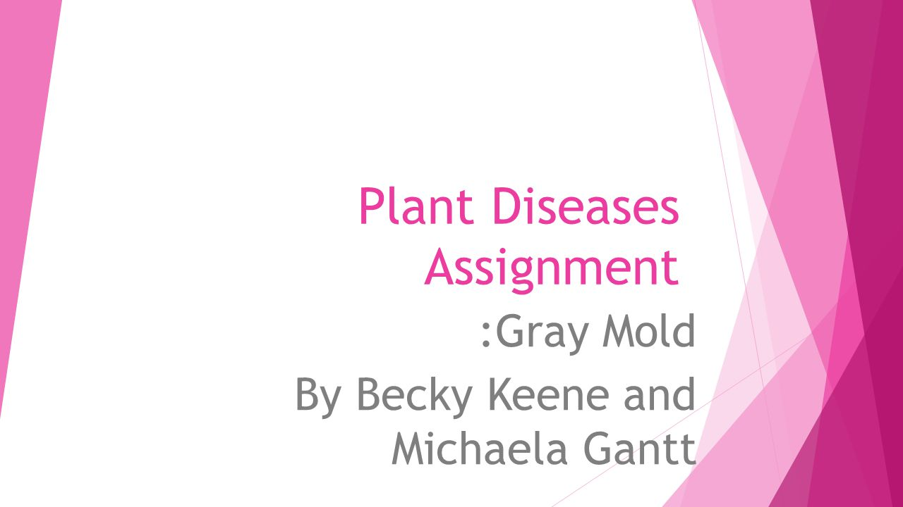 Plant Diseases Assignment :Gray Mold By Becky Keene and Michaela Gantt