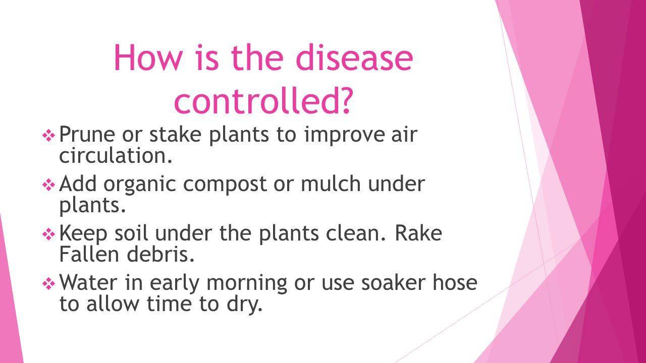 How is the disease controlled.  Prune or stake plants to improve air circulation.