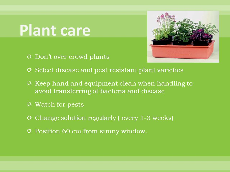  Don't over crowd plants  Select disease and pest resistant plant varieties  Keep hand and equipment clean when handling to avoid transferring of bacteria and disease  Watch for pests  Change solution regularly ( every 1-3 weeks)  Position 60 cm from sunny window.