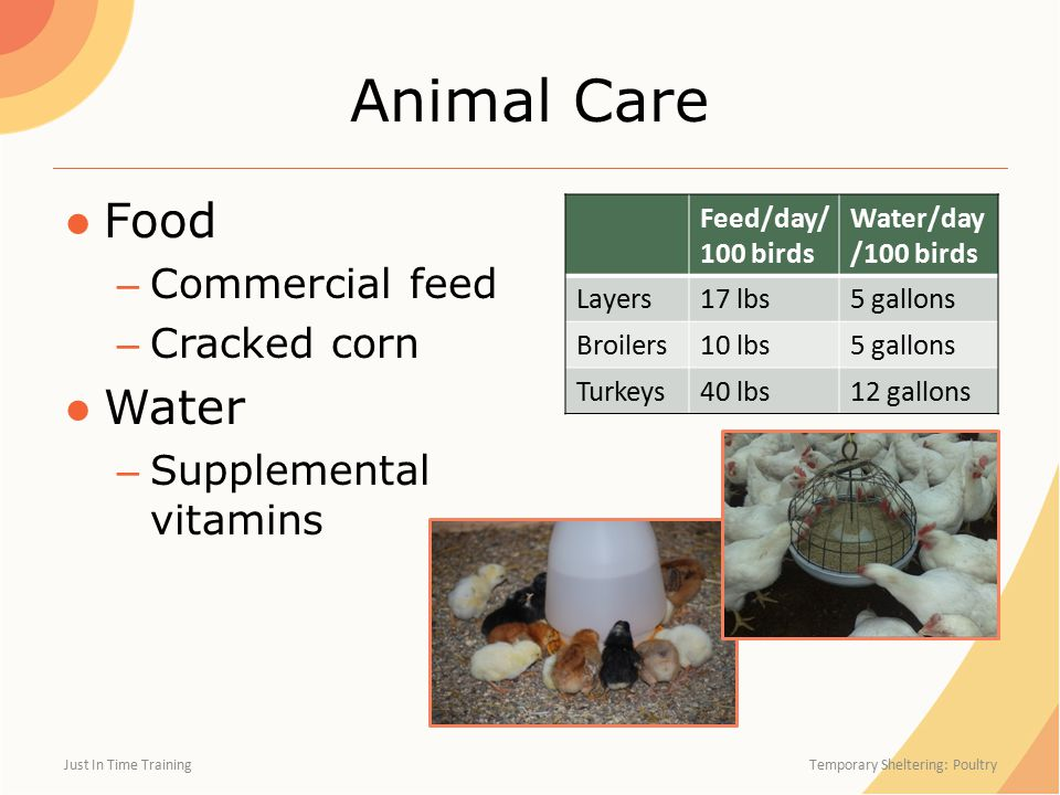 Animal Care ●Food – Commercial feed – Cracked corn ●Water – Supplemental vitamins Just In Time Training Temporary Sheltering: Poultry Feed/day/ 100 birds Water/day /100 birds Layers17 lbs5 gallons Broilers10 lbs5 gallons Turkeys40 lbs12 gallons