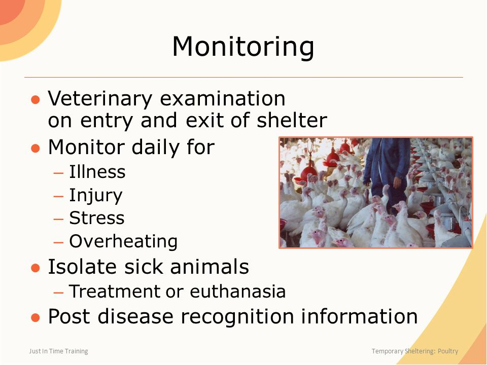 Monitoring ●Veterinary examination on entry and exit of shelter ●Monitor daily for – Illness – Injury – Stress – Overheating ●Isolate sick animals – Treatment or euthanasia ●Post disease recognition information Just In Time Training Temporary Sheltering: Poultry