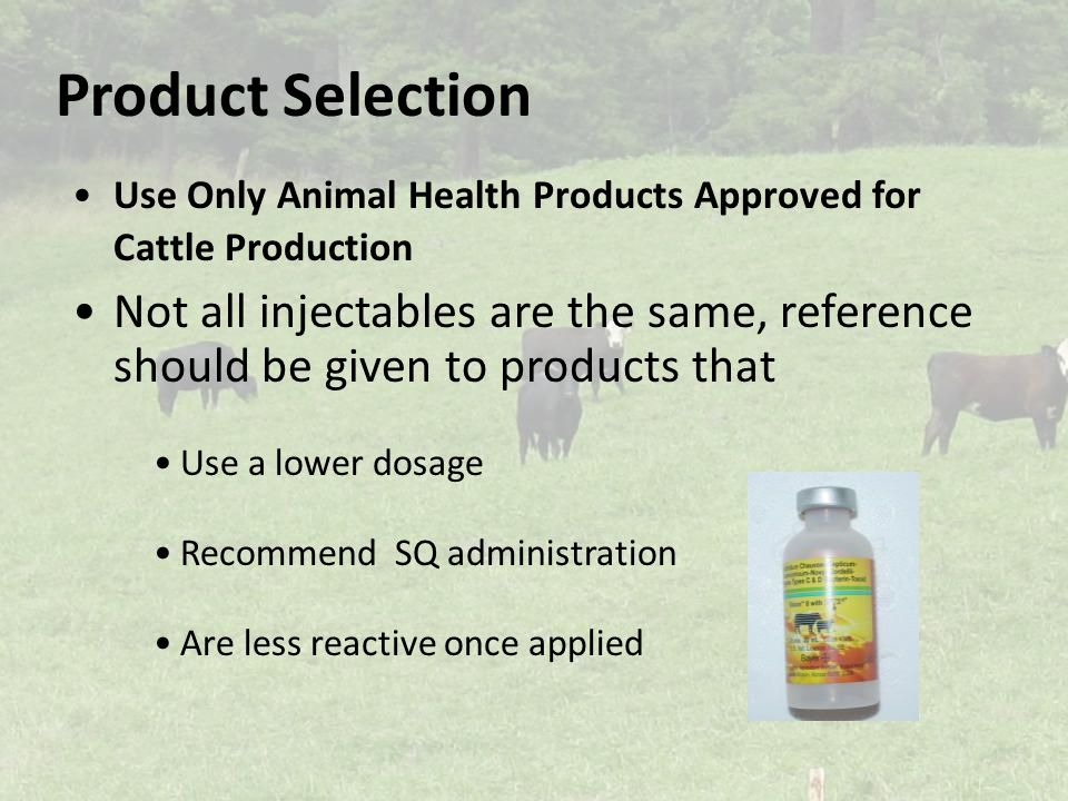 Product Selection Use Only Animal Health Products Approved for Cattle Production Not all injectables are the same, reference should be given to products that Use a lower dosage Recommend SQ administration Are less reactive once applied