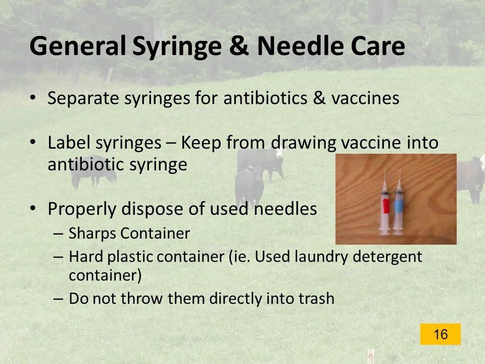 General Syringe & Needle Care Separate syringes for antibiotics & vaccines Label syringes – Keep from drawing vaccine into antibiotic syringe Properly dispose of used needles – Sharps Container – Hard plastic container (ie.