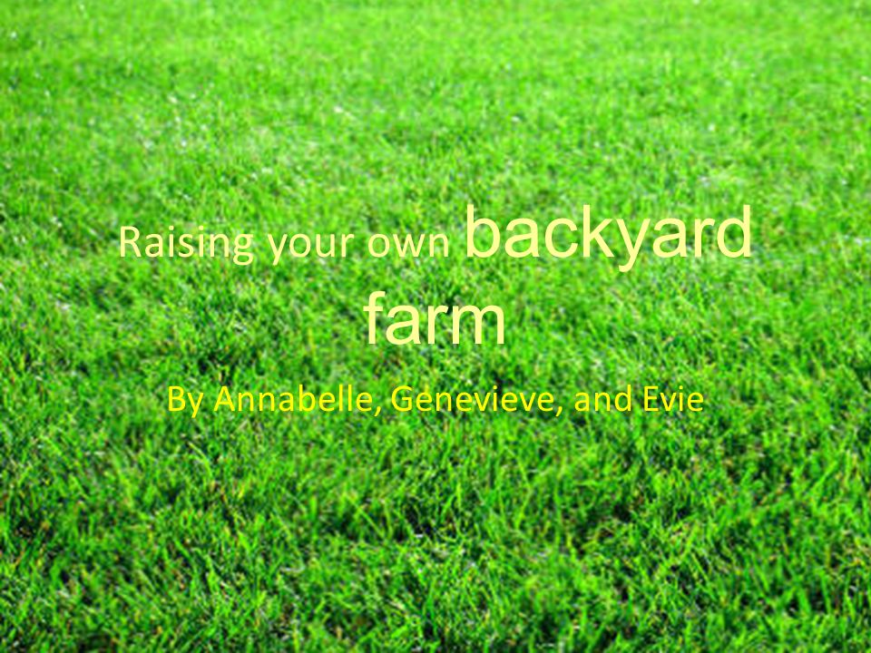 Raising your own backyard farm By Annabelle, Genevieve, and Evie