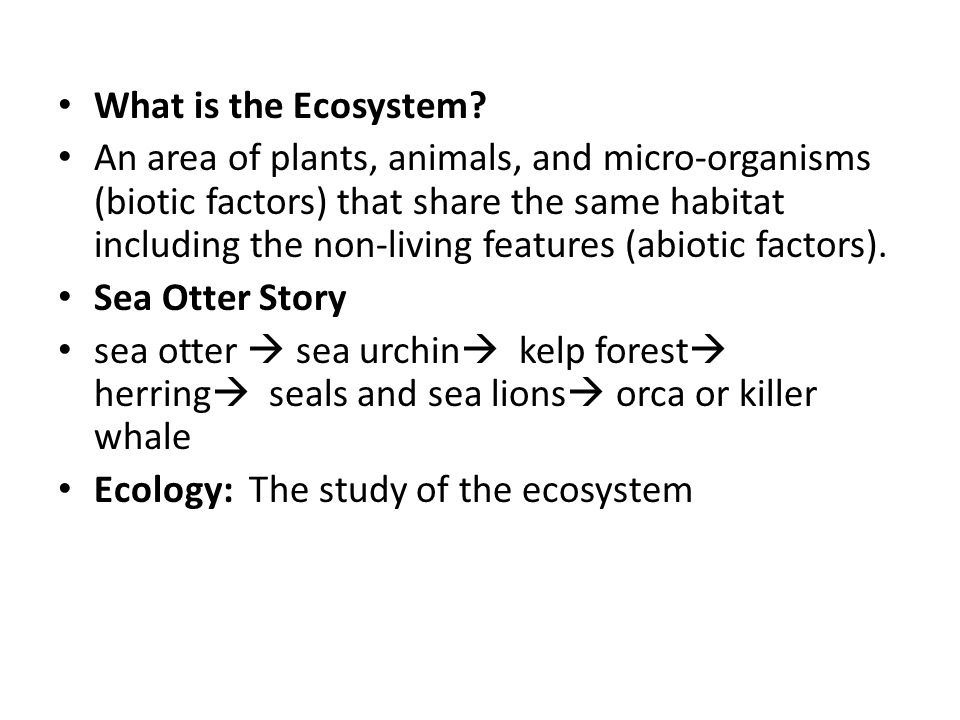 What is the Ecosystem.