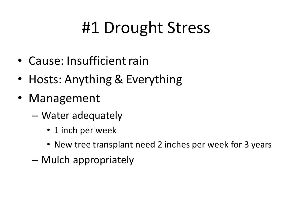 #1 Drought Stress Cause: Insufficient rain Hosts: Anything & Everything Management – Water adequately 1 inch per week New tree transplant need 2 inches per week for 3 years – Mulch appropriately