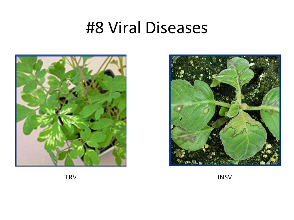 #8 Viral Diseases TRVINSV