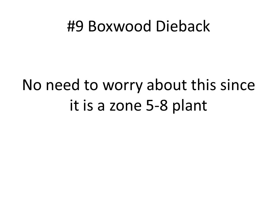 #9 Boxwood Dieback No need to worry about this since it is a zone 5-8 plant