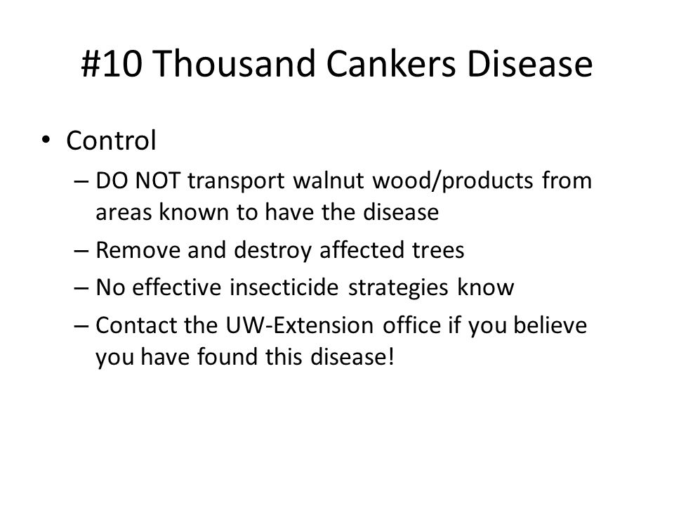 #10 Thousand Cankers Disease Control – DO NOT transport walnut wood/products from areas known to have the disease – Remove and destroy affected trees – No effective insecticide strategies know – Contact the UW-Extension office if you believe you have found this disease!