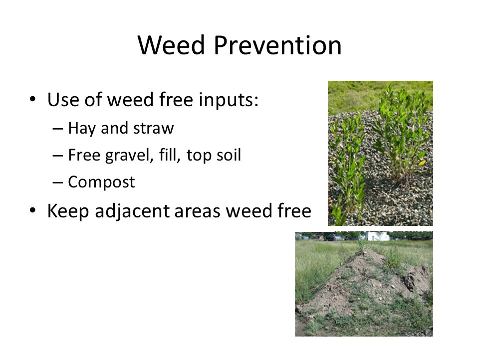 Weed Prevention Use of weed free inputs: – Hay and straw – Free gravel, fill, top soil – Compost Keep adjacent areas weed free