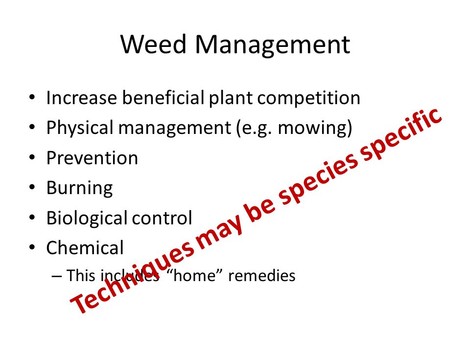 Weed Management Increase beneficial plant competition Physical management (e.g.