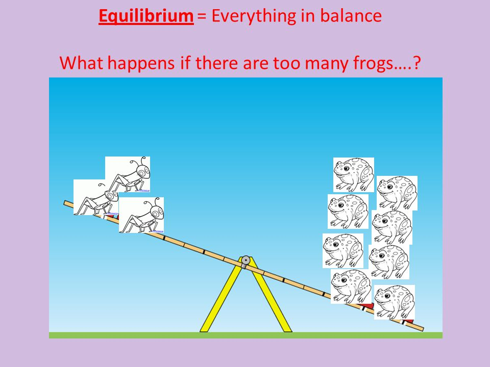 Equilibrium = Everything in balance What happens if there are too many frogs….?