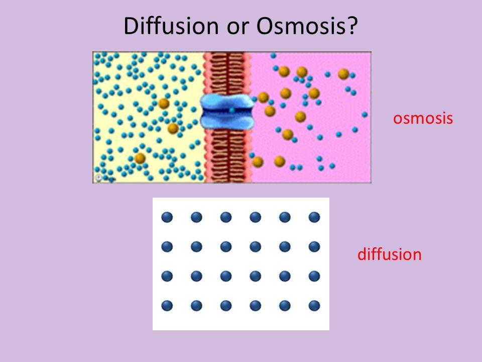Diffusion or Osmosis? diffusion osmosis