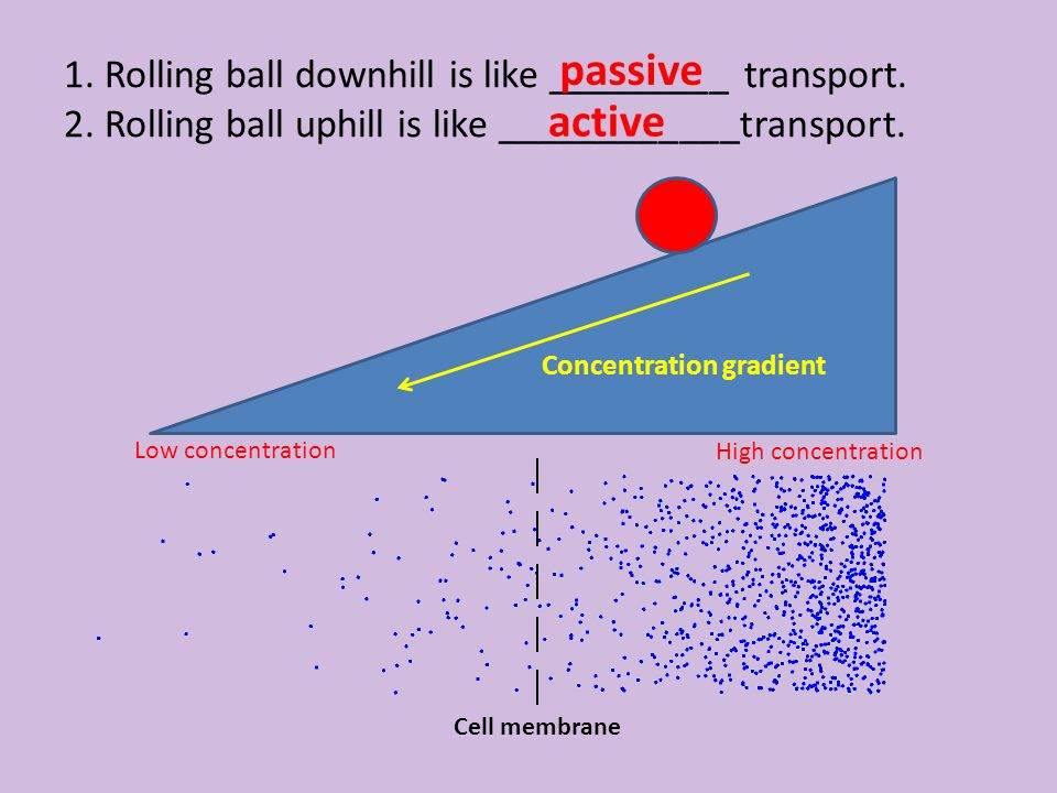 High concentration Low concentration 1. Rolling ball downhill is like _________ transport. 2. Rolling ball uphill is like ____________transport. Cell