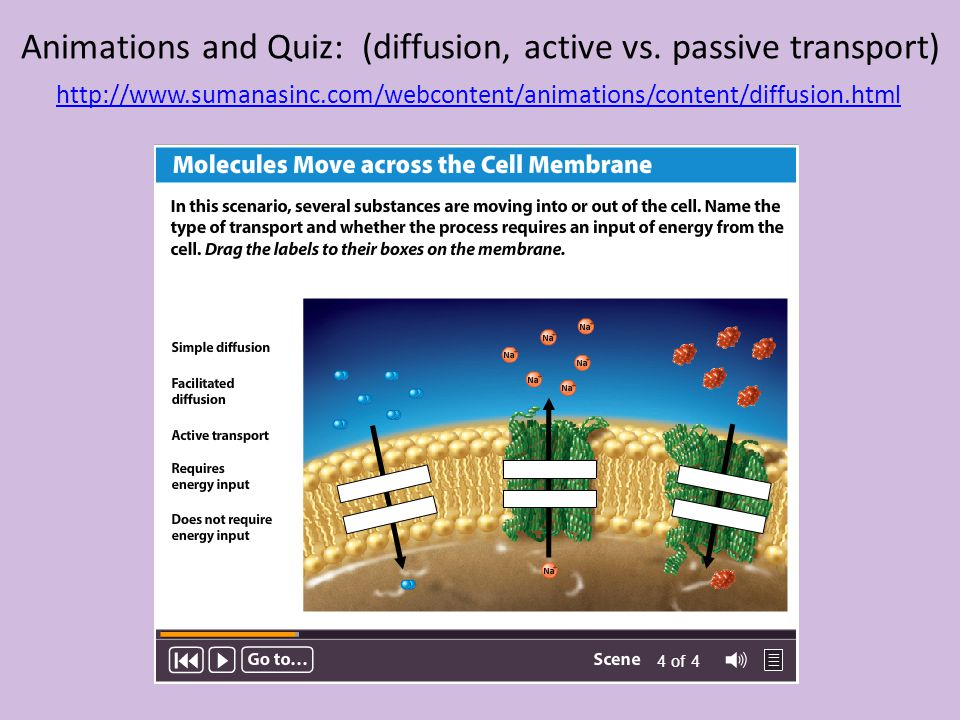 Animations and Quiz: (diffusion, active vs. passive transport) http://www.sumanasinc.com/webcontent/animations/content/diffusion.html