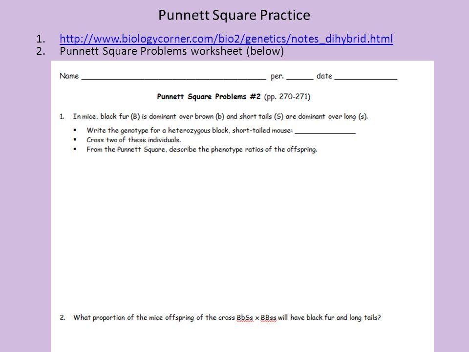 Punnett Square Practice 1.http://www.biologycorner.com/bio2/genetics/notes_dihybrid.htmlhttp://www.biologycorner.com/bio2/genetics/notes_dihybrid.html