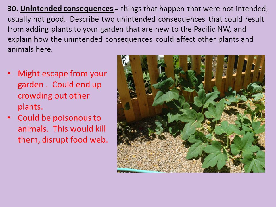 30. Unintended consequences = things that happen that were not intended, usually not good. Describe two unintended consequences that could result from