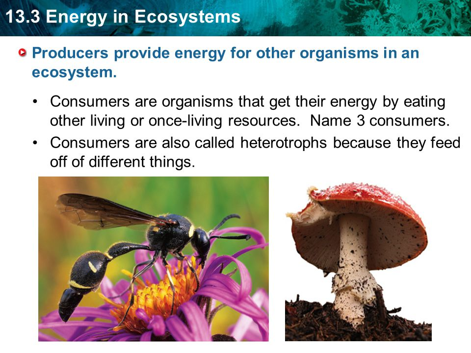 13.3 Energy in Ecosystems Producers provide energy for other organisms in an ecosystem.