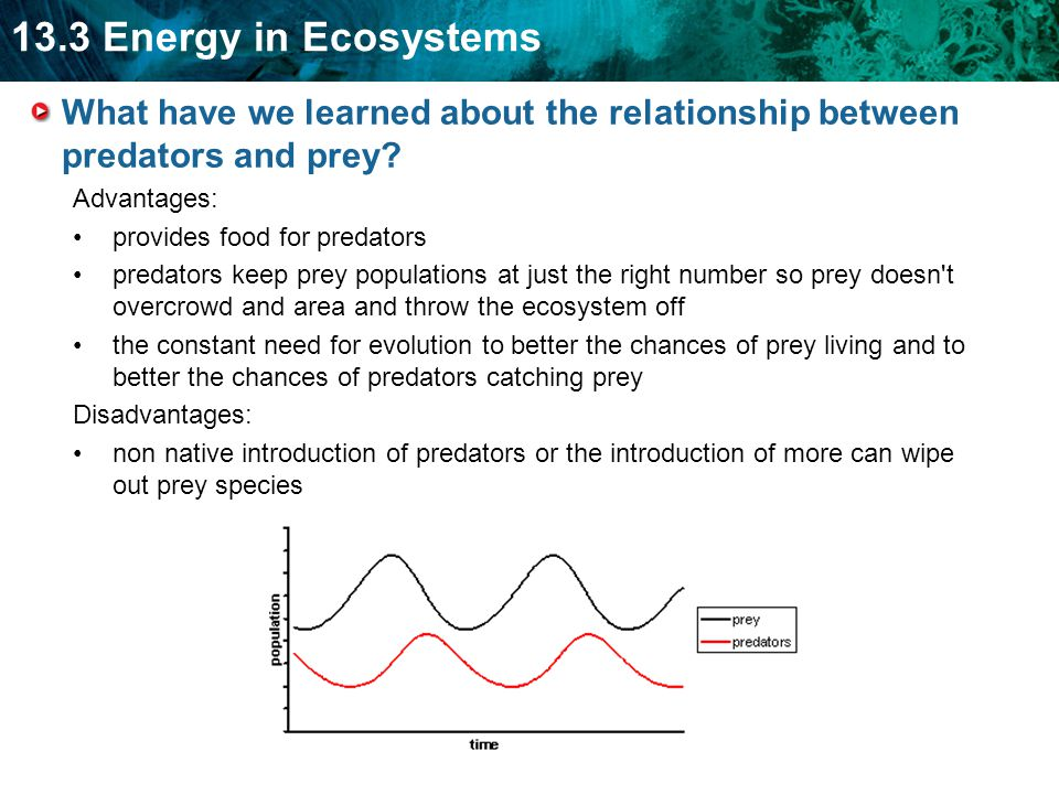 13.3 Energy in Ecosystems What have we learned about the relationship between predators and prey.