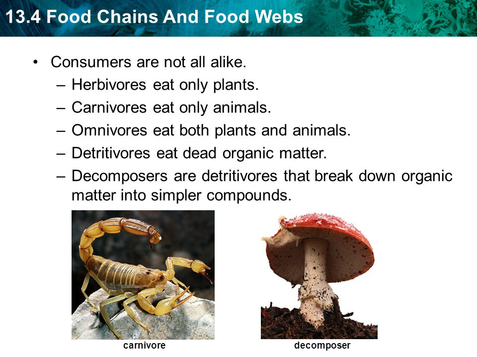 13.4 Food Chains And Food Webs Consumers are not all alike.