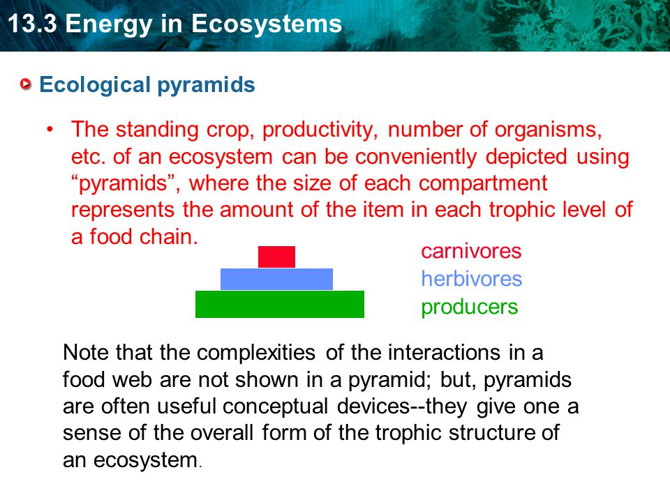 Ecological pyramids The standing crop, productivity, number of organisms, etc.