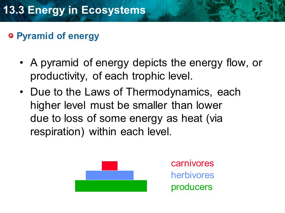 13.3 Energy in Ecosystems Pyramid of energy A pyramid of energy depicts the energy flow, or productivity, of each trophic level.