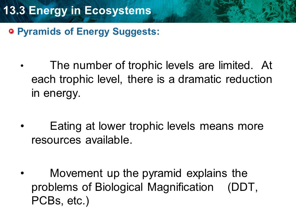 13.3 Energy in Ecosystems Pyramids of Energy Suggests: The number of trophic levels are limited.