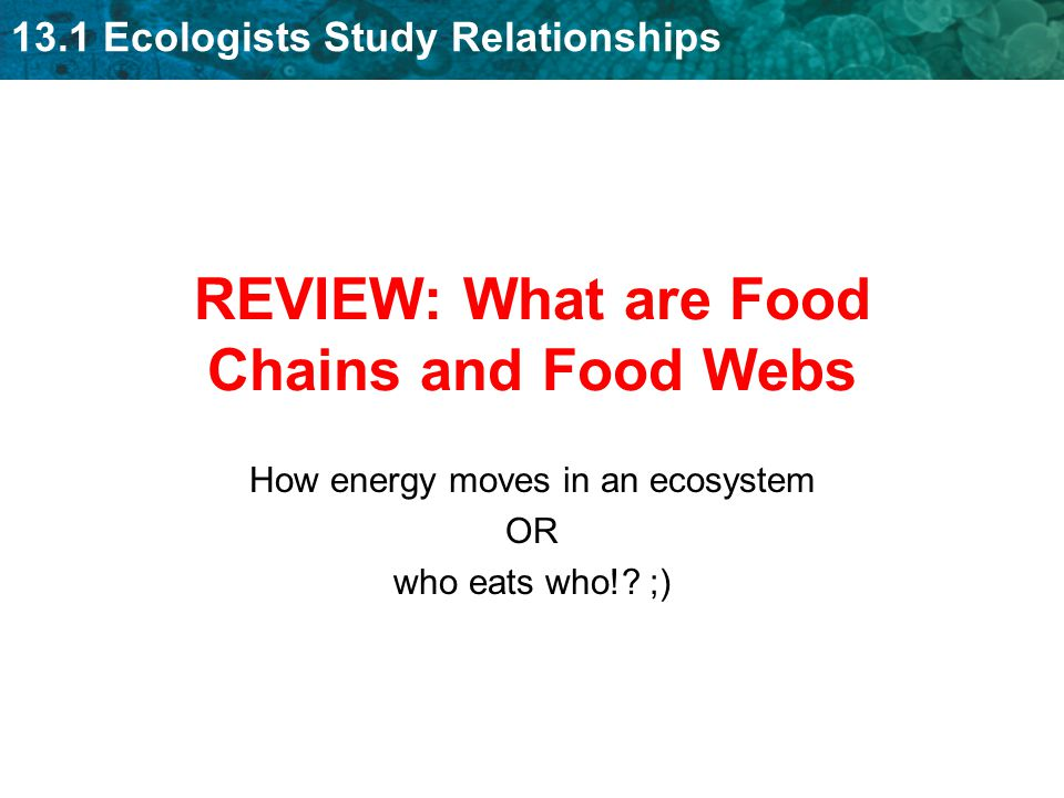 13.1 Ecologists Study Relationships REVIEW: What are Food Chains and Food Webs How energy moves in an ecosystem OR who eats who!.