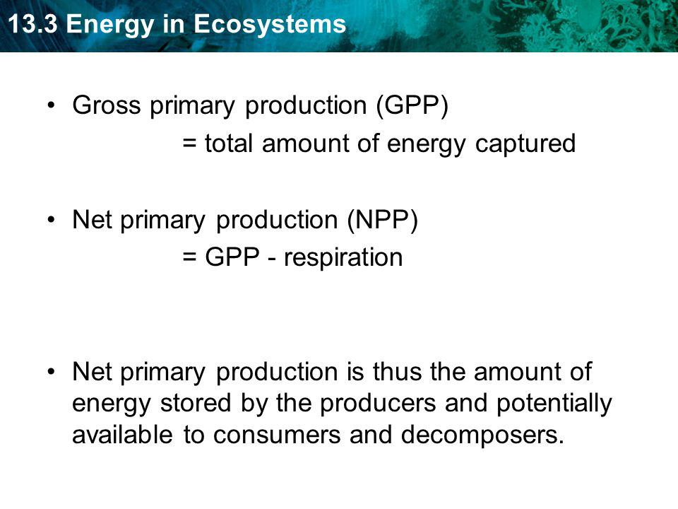 13.3 Energy in Ecosystems Gross primary production (GPP) = total amount of energy captured Net primary production (NPP) = GPP - respiration Net primary production is thus the amount of energy stored by the producers and potentially available to consumers and decomposers.