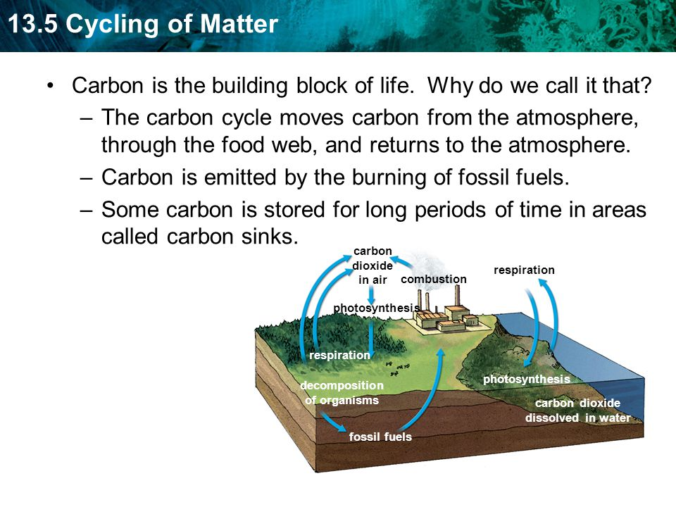 13.5 Cycling of Matter fossil fuels photosynthesis carbon dioxide dissolved in water decomposition of organisms respiration carbon dioxide in air photosynthesis combustion respiration Carbon is the building block of life.