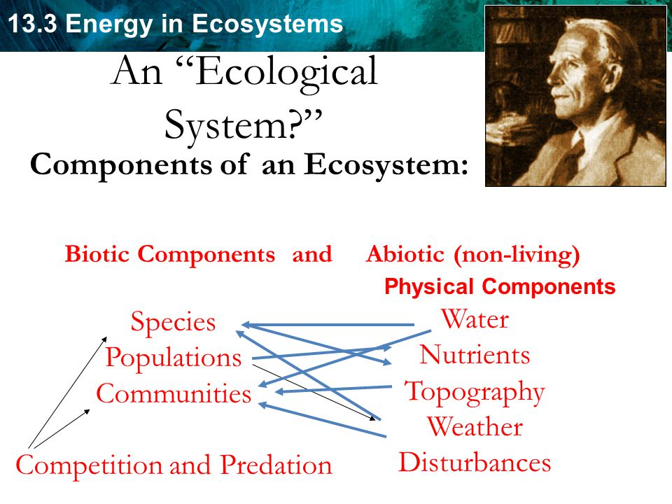 13.3 Energy in Ecosystems Sir Arthur Tansley (1871-1955) Components of an Ecosystem: Biotic Components and Abiotic (non-living) Species Populations Communities Competition and Predation Water Nutrients Topography Weather Disturbances An Ecological System? Physical Components