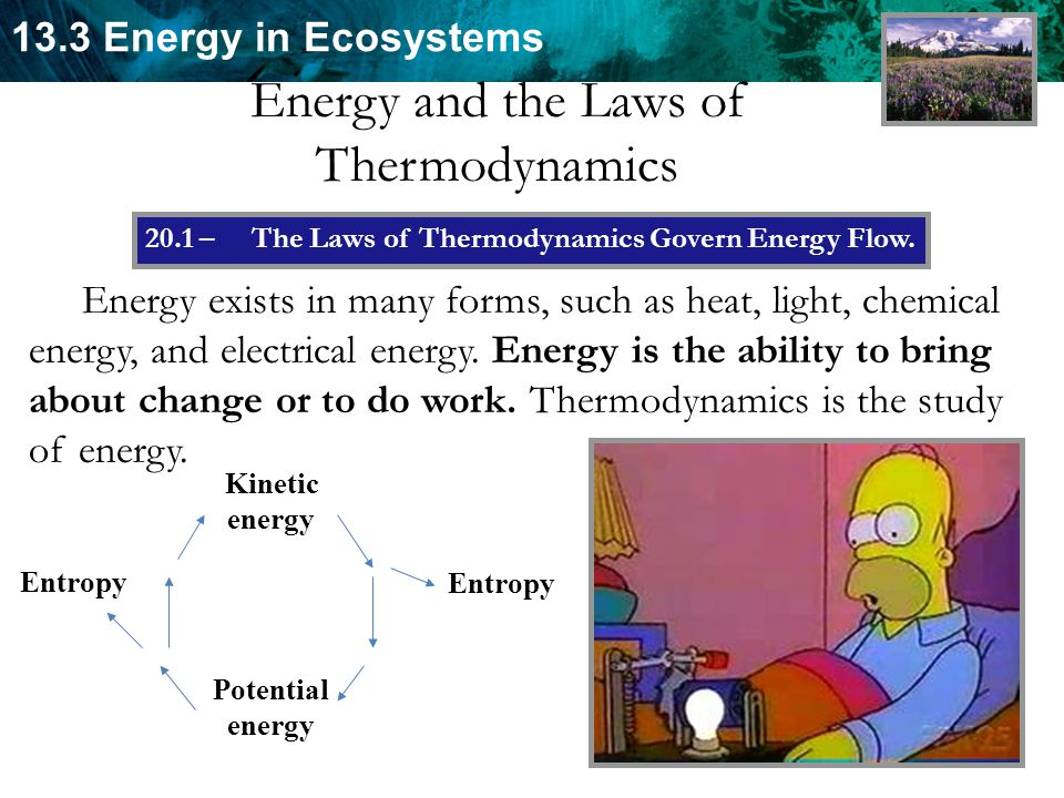 13.3 Energy in Ecosystems Energy and the Laws of Thermodynamics Energy exists in many forms, such as heat, light, chemical energy, and electrical energy.