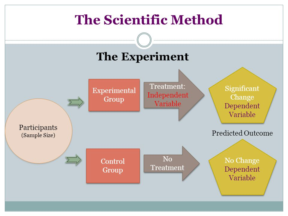 The Scientific Method The Experiment Participants (Sample Size) Participants (Sample Size) Experimental Group Experimental Group Control Group Control