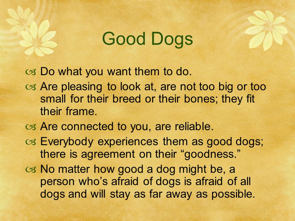 Good Dogs  Do what you want them to do.  Are pleasing to look at, are not too big or too small for their breed or their bones; they fit their frame.