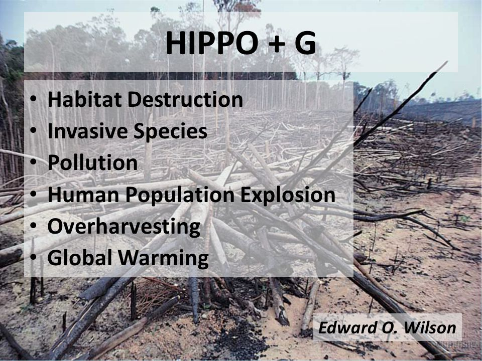 Habitat Destruction Invasive Species Pollution Human Population Explosion Overharvesting Global Warming HIPPO + G Edward O.
