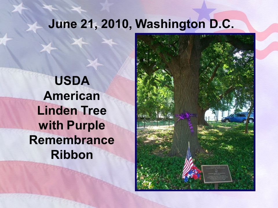 June 21, 2010, Washington D.C. USDA American Linden Tree with Purple Remembrance Ribbon
