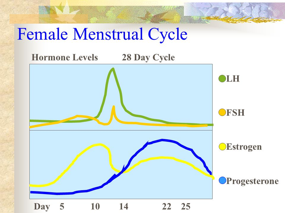 Female Menstrual Cycle LH FSH Estrogen Progesterone Hormone Levels 28 Day Cycle Day 5 10 14 22 25