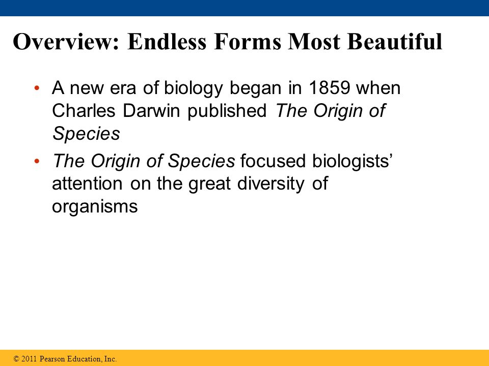 Comparative embryology reveals anatomical homologies not visible in adult organisms © 2011 Pearson Education, Inc.