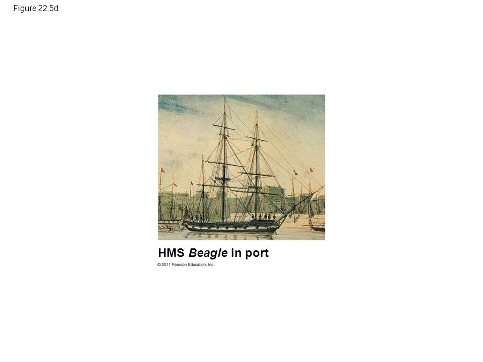 Figure 22.5d HMS Beagle in port