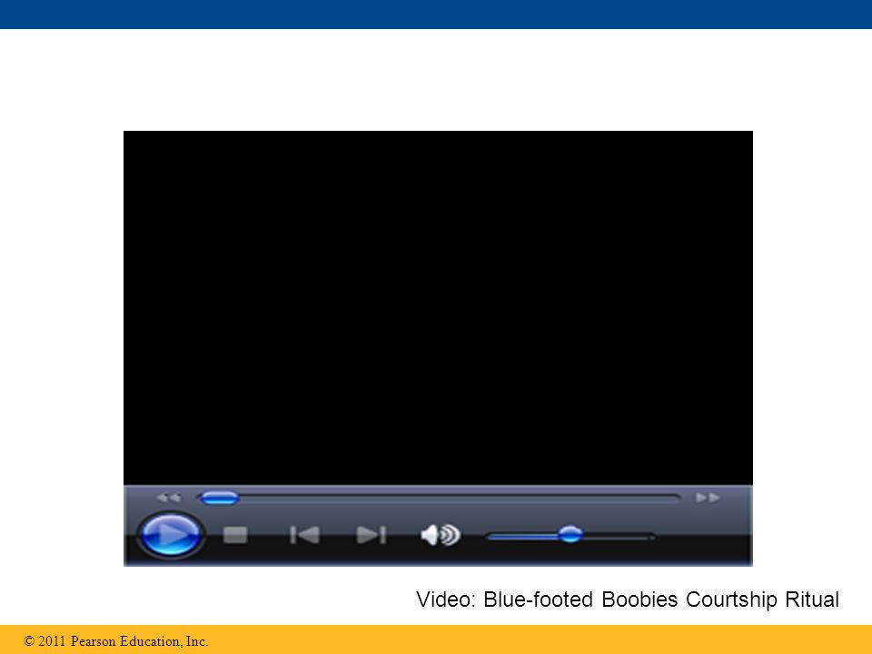 © 2011 Pearson Education, Inc. Video: Blue-footed Boobies Courtship Ritual