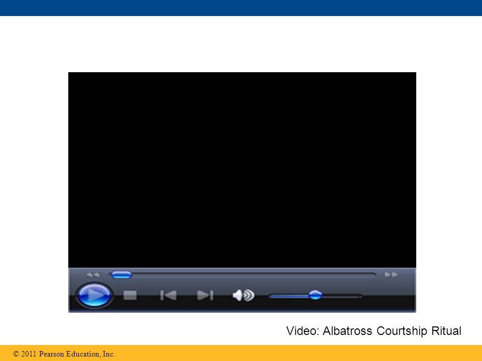 © 2011 Pearson Education, Inc. Video: Albatross Courtship Ritual